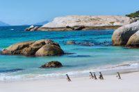 Sprachreise nach Kapstadt in Südafrika - Pinguine am Boulders Beach