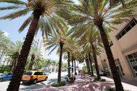 Sprachreise Miami Palmenallee