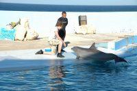 Schülersprachreise nach Sliema auf Malta - Freizeitprogramm Delfinshow